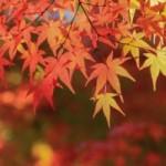 紅葉といえば関東!紅葉マスターがおすすめする名所トップ10